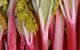 Rhubarb.